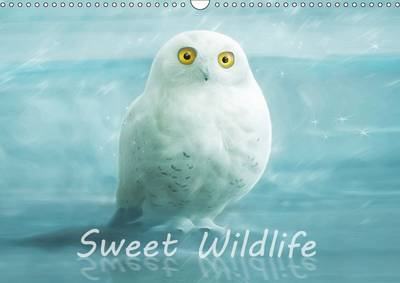 Sweet Wildlife / UK-Version / Birthday Calendar 2017 - Silvio Schoisswohl