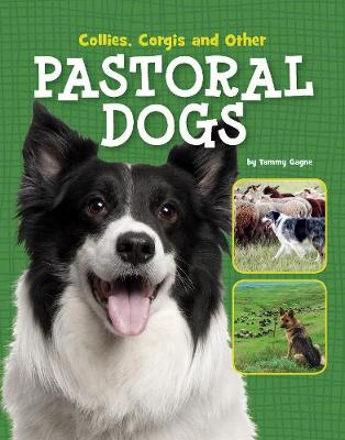 Collies, Corgis and Other Pastoral Dogs - Tammy Gagne