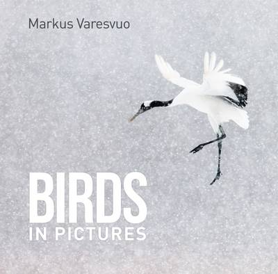 Birds in Pictures - Markus Varesvuo
