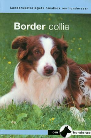 Border collie - Inger Handegård