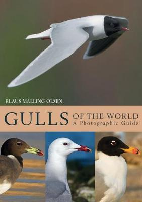 Gulls of the World - Klaus Malling Olsen