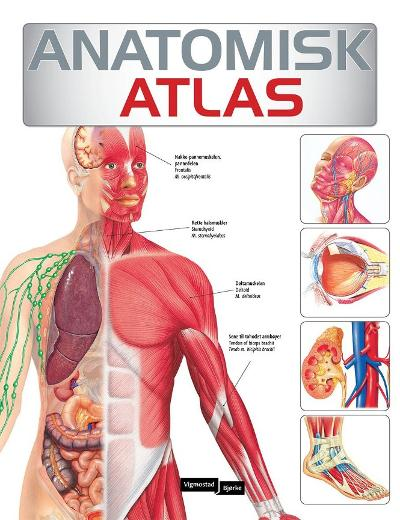 Anatomisk atlas - Trude Monssen