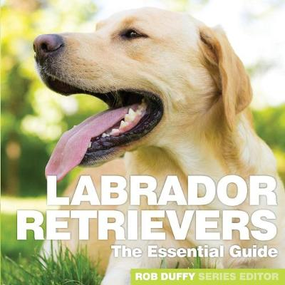Labrador Retrievers - Robert Duffy