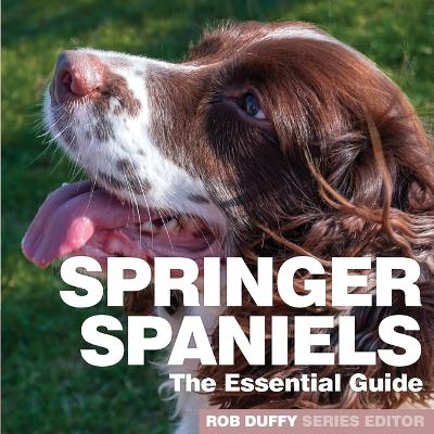 Springer Spaniels - Robert Duffy
