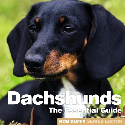 Dachshunds - Robert Duffy