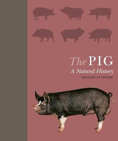 The Pig - Richard Lutwyche