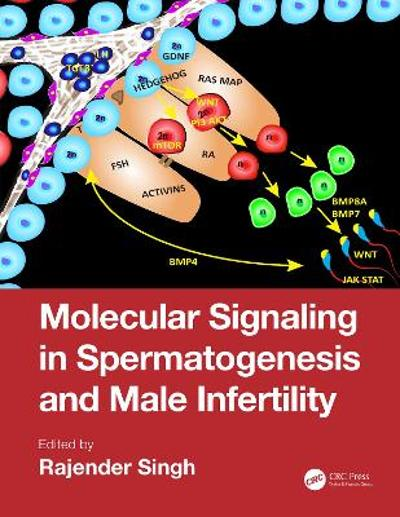 Molecular Signaling in Spermatogenesis and Male Infertility - Rajender Singh