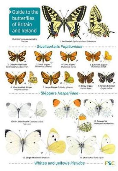 Guide to the butterflies of Britain and Ireland - John Bebbington