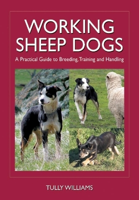 Working Sheep Dogs - Tully Williams