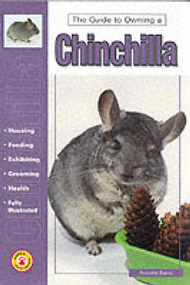 Guide to Owning a Chinchilla - Anmarie Barrie